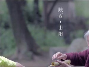 本来山房周拍摄山阳槲叶粽子
