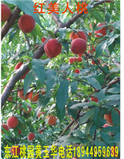 塔峰镇东江村出售黄桃、油桃、水蜜桃、青桃