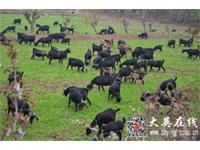 大英县青禾家庭农场
