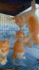 小猫咪真可爱(手机摄影)