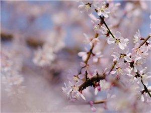 这就是汉中的春天啊