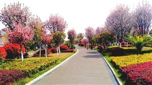 公园里的垂丝海棠