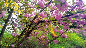 天汉湿地公园花开不断(手机摄影)