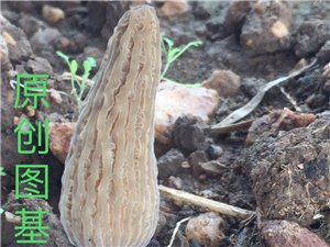 中药材食用菌技术培训包教包会包销