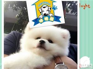 我家狗狗生了小奶狗,三个月多的博美超级活泼可爱,爱狗狗人士领养吧
