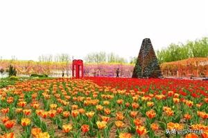 汉中家门口的最美春天