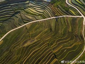 一组夏季稻田组图让你一览汉中初夏风