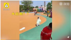 爆笑!熊孩子在游乐场玩得亲妈都认不出,网友:以为是大白鹅